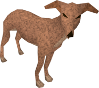 Greyhound (light brown) pet