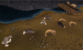 Seals sleeping.png