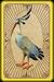 Preening ibis card detail