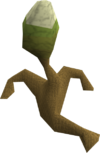 Gout tuber plant