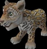 Jaguar cub pet