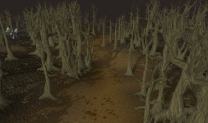 Wilderness forest old