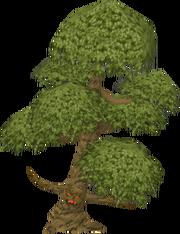 Yew tree ent