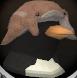 Captured penguin chathead
