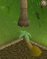 Palm4.png