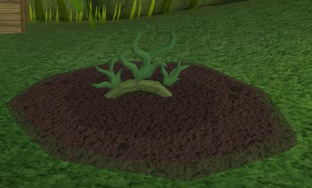 Vine herbs4