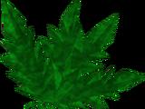 Doogle leaves