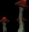 Blushroom detail