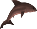 Great white shark detail.png