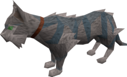Wily cat (white and blue) pet
