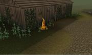Fogo janela padre Urhney