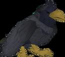 Raven (Prifddinas)