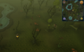 Scan clue Haunted Woods south-east of lake containing island.png