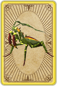 Trading mantis card detail