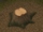 Yew tree stump.png