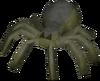 Spider Courtier
