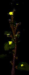 Exuberry bush