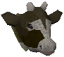 Dairy cow detail