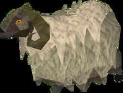 Ram (shaggy)