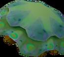 Raw green blubber jellyfish