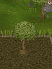 Spirit tree6