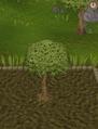 Spirit tree6.png