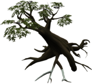 Season Tree