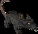 Giant rat (Dungeoneering)