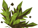 Grimy snake weed