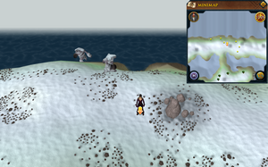 Scan clue Fremennik Isles north of land bridge connecting two snowy islands