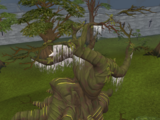 Árvore Anciã