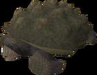 Tortoise old