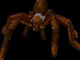 Huge spider