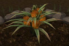 File:Pineapple plant 7.png