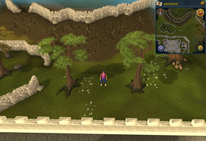 Compass clue Falador east of standing stones