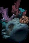 Hermit crab coral detail