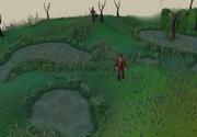 Lumbridge swamp