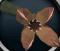 Livid plant (Deep Sea Fishing) detail
