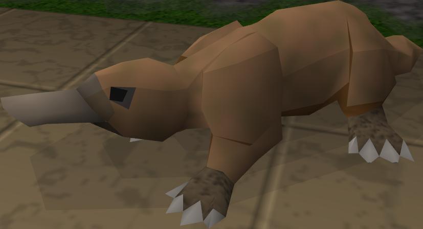 Platypus As Pets