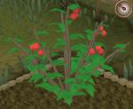 Redberry6