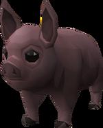 Pigzilla piglet