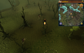 Scan clue Haunted Woods north-west of fairy ring.png