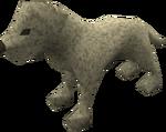 Labrador puppy (white) pet