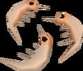 Raw shrimps detail.png