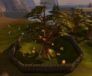 Golden Apple Tree