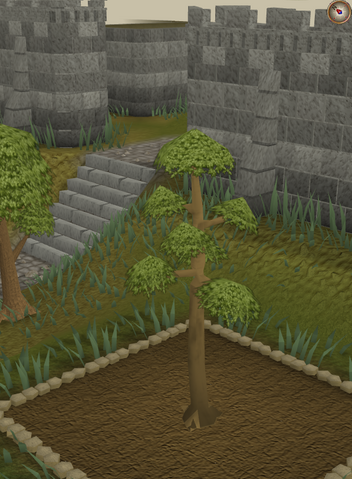 File:Yew4.png
