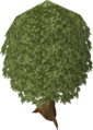 Oak tree old.png