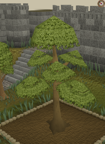 File:Yew6.png