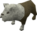 Bulldog puppy (white) pet.png