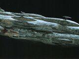 Звёздный крейсер MC80 типа «Дом Один»